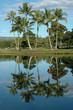 Wailoa Pond, Hilo, Hawaii USA