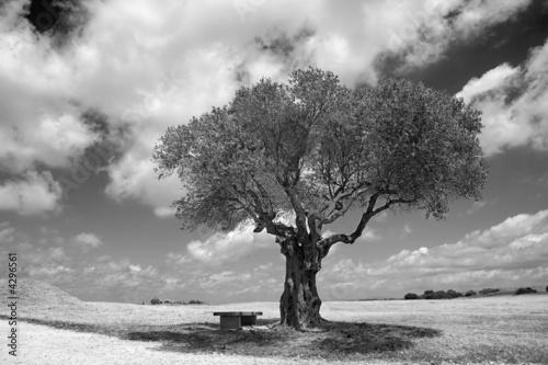Cadres-photo bureau Oliviers ulivo