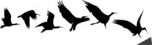 Bird Flight And Landing (silhouettes)