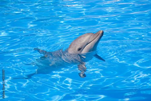 Fotografie, Obraz  A happy Bottlenose Dolphin