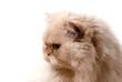 cat-I