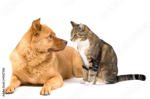 Dog and cat on white background © Michael Pettigrew