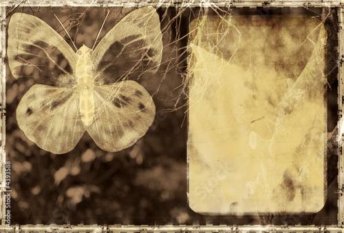 Foto op Aluminium Vlinders in Grunge Grunge background