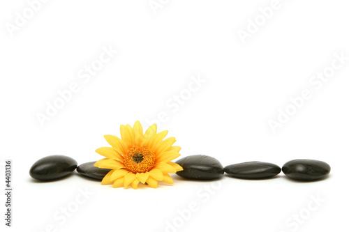 Doppelrollo mit Motiv - Massage stones and daisy (von MAXFX)