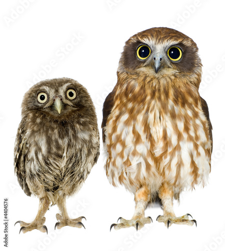 Fotobehang Uil female owl and a owlet
