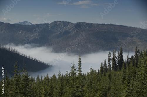 Fototapeten Wald Morning Fog
