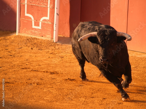 Photo Stands Bullfighting Tentadero
