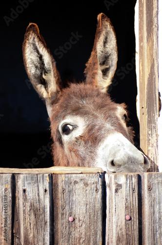 Neugieriger Esel