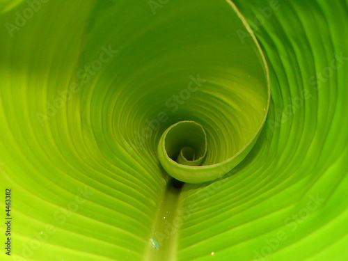 Photo sur Aluminium Macro photographie macro