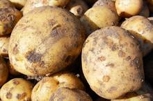 Raw New Potatoes