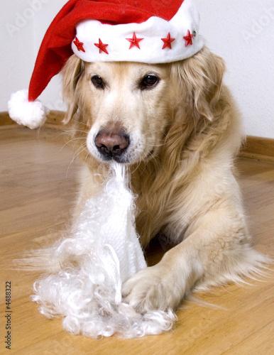hund weihnacht Canvas Print