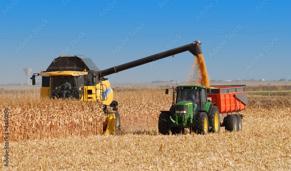 Fototapety, obrazy: récolte du maïs à grains