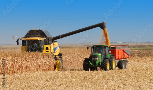 Fotografie, Obraz  récolte du maïs à grains