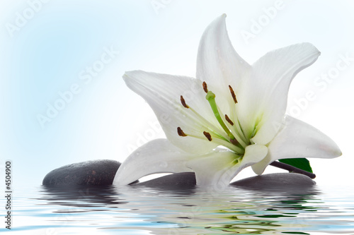 Montage in der Fensternische Wasserlilien madonna lily and spa stone in water