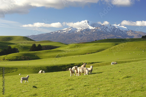 Wall Murals New Zealand New Zealand Scenery
