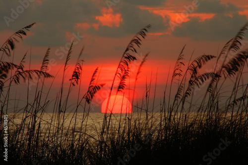 Photo  Seaoat Sunset
