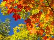 Leinwandbild Motiv couleurs parc de la mauricie