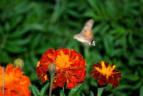 Fotografie, Obraz  Butterfly 3