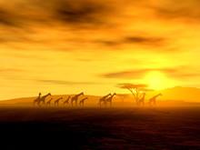 Giraffen Auf Der Wanderung