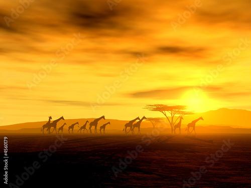 Foto-Kissen premium - Giraffen auf der Wanderung  (von Nicole Steinbichler)