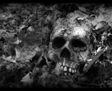 Vignetted Skull