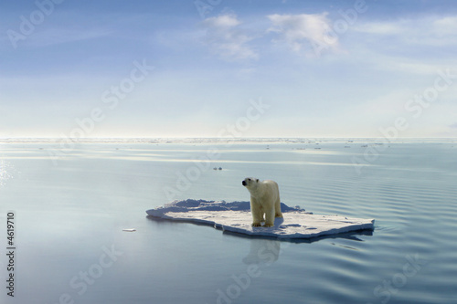 Fotobehang Ijsbeer Global warming