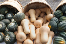 Fresh Squash For Sale At Farme...