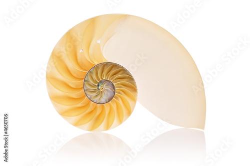 Split Nautilus