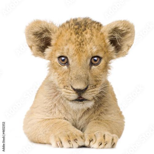 Foto op Plexiglas Leeuw Lion Cub (3 months)