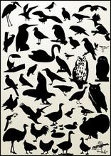 Birds Sihoette (vector Bird)