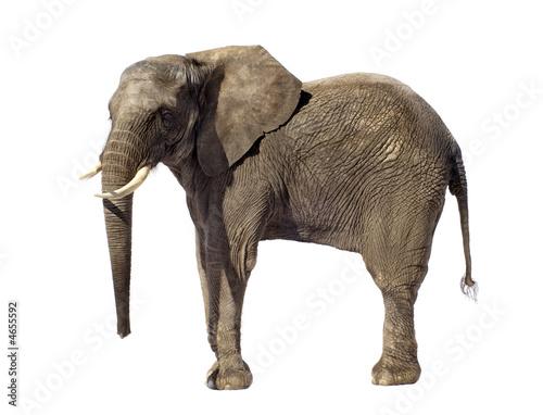 Fotobehang Olifant elephant