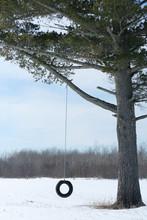 Tire Swing On A Lone Pine Tree In Winter