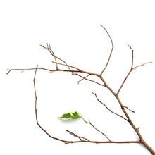 Branche Dénudée