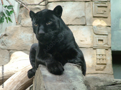 Photo Stands Panther Bagira