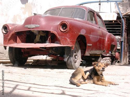Photo Chien & automobile américaine, épave - Cuba