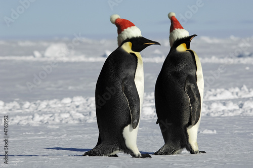 Tuinposter Pinguin Penguin couple on Christmas