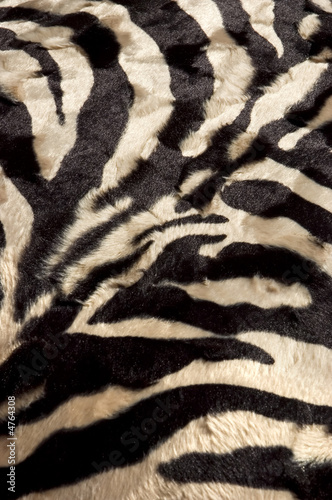 Canvas Prints Zebra Zebra background