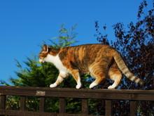 Cat On Garden Fence