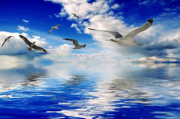 Fototapeta Optyczne powiększenie Birds