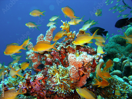 Poster Onder water Coral reef fish
