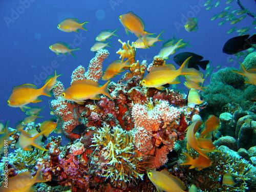 Papiers peints Recifs coralliens Coral reef fish