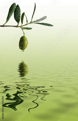 Tuinposter Olijfboom oliva riflessa su un mare d'olio