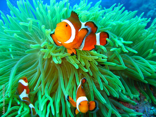 In de dag Onder water Nemo found