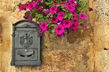 Old-looking Mailbox With Petun...