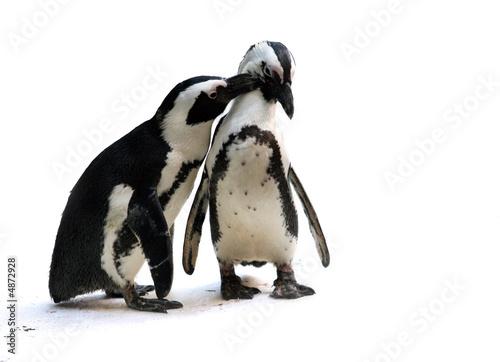Fotografie, Obraz  Penguin couple