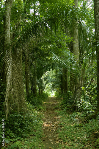 walking path in the tropical forest wide shot #4886190