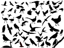 Lots Of Birds Vectors Silhouette