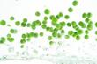 flying peas