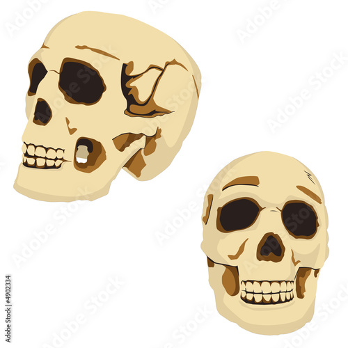 Photo  Skulls