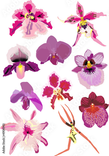 Tuinposter illustration with pink orchids